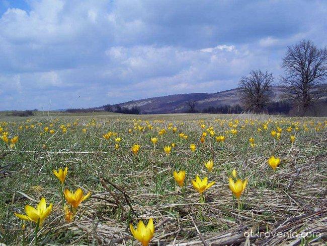 Пролет-2